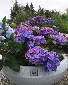 Dråpe Lav - Blomster - Lys Granitt