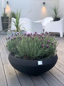 Dråpe Lav - Blomster - Sort
