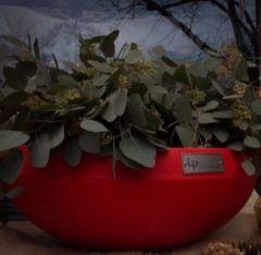 Dråpe Lav - Blomster - Rød