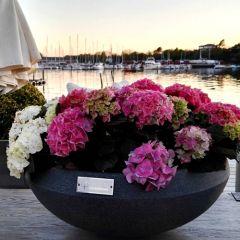 Dråpe Lav - Blomster - Koksgrå